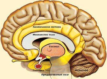 hypofýzy adenóm