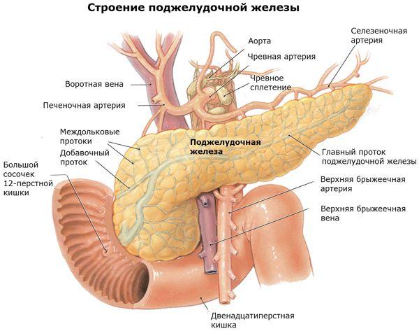 Structura corpului