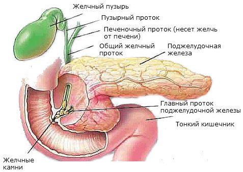 Structura pancreasului