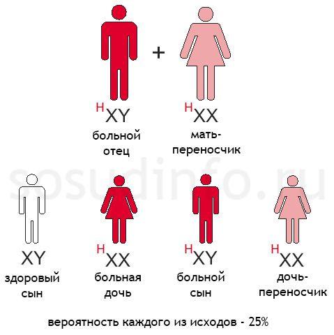 hemofilija: hemofilija Otac, majka - transporter gena
