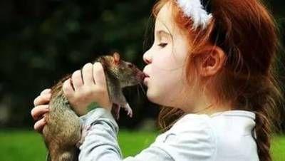 Copilul sărutări un șobolan