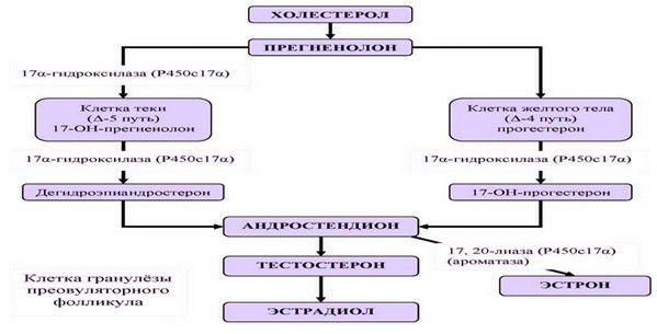 Hyperandrogenism Fig. 2