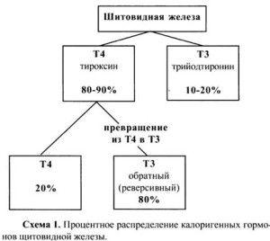 Hormonii T3 și T4