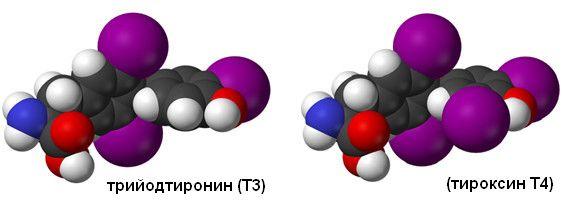 Trijodtyronin a tyroxin T3 T4