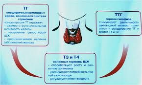 TG TSH T3 T4