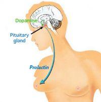 Modalități de a reduce prolactină