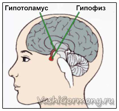 Luteinizační hormon - nestálý, vyžaduje stealth
