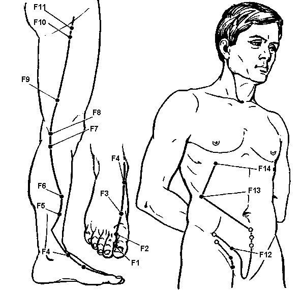Akupunturnye puncte meridianul ficat