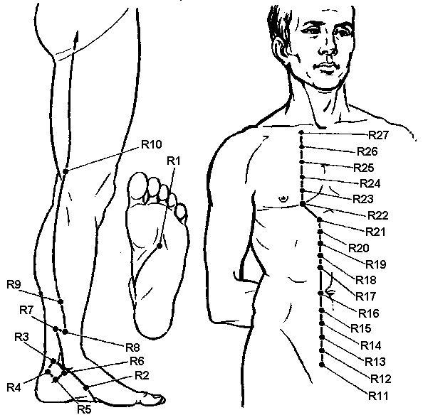 Meridian Kidney (r)