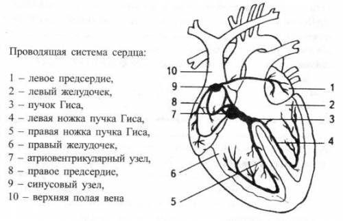 Sistem de conducere cardiacă