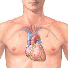 Transplantace srdce: povaha a realita provozu, čtení, hospodářství, prognóza