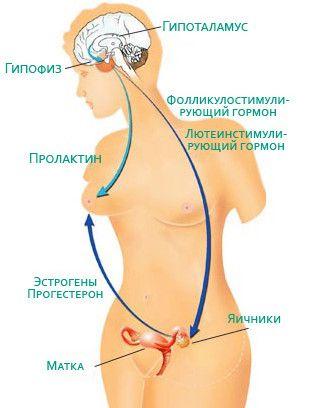 Funcțiile hormonului prolactina pentru femei