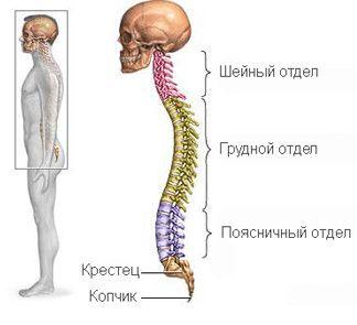 Simptome și semne de boli degenerative de disc a coloanei vertebrale toracice
