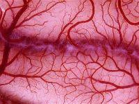 vascularizatia