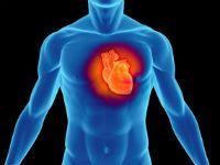Struktura lidského srdce a jeho funkce