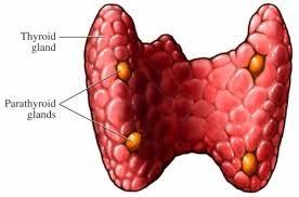 tiroidni