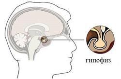 pituitară
