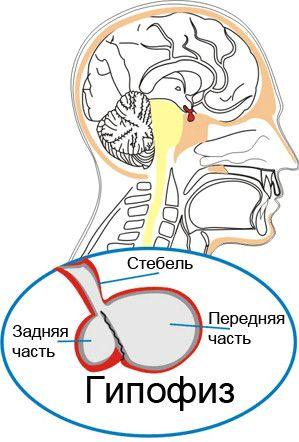 Hypofýza a jej poruchy
