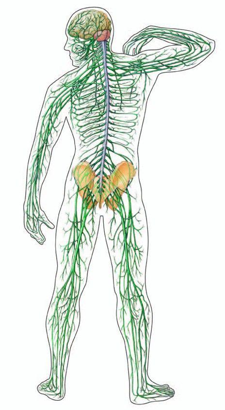 Bolesti živčanog sustava, u tibetanskoj medicini