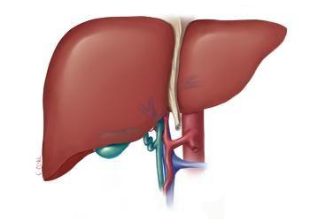 Bolesti jetre u tibetanskom medicini