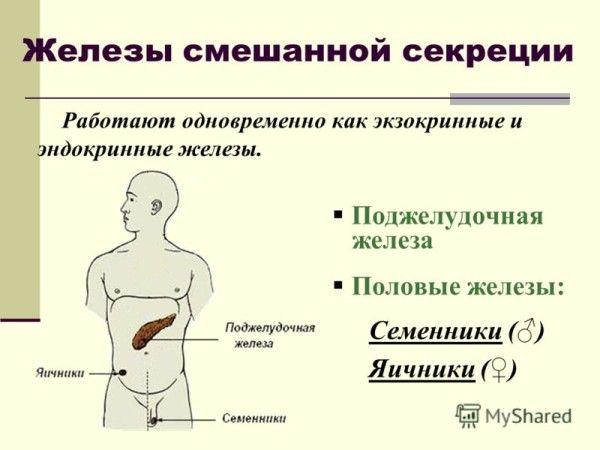 secreția glandelor mixte