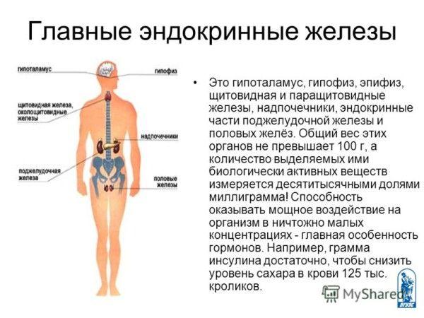 Principalele glande endocrine