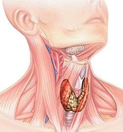 tiroidă